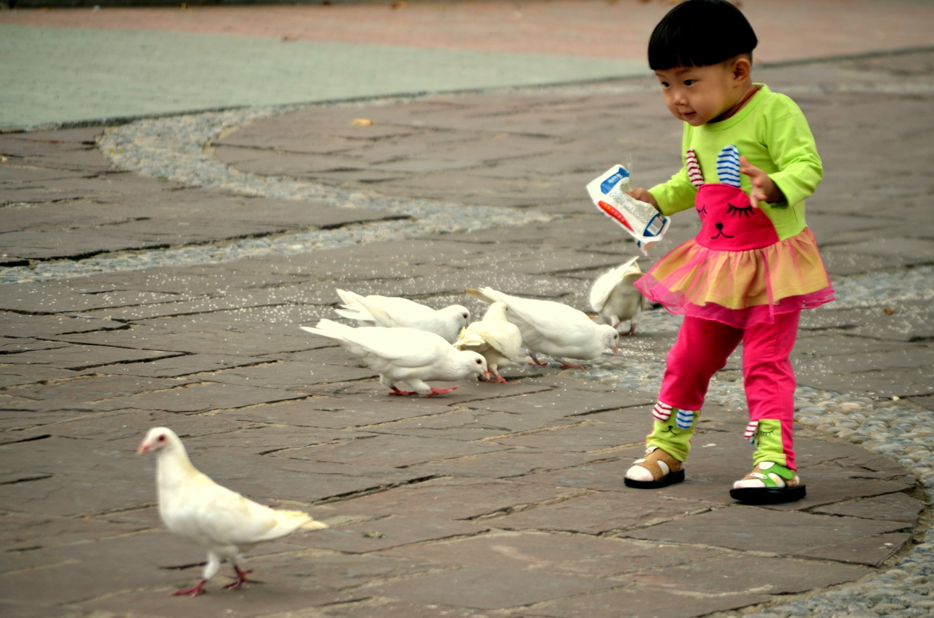 child with pigeons
